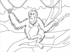 orangutan coloring page 300x224 - PACK COLECCIÓN LIBRO DIBUJOS PARA IMPRIMIR Y COLOREAR PDF FÁCILES INFANTILES PARA NIÑOS PRIMARIA GRATIS PARA PINTAR